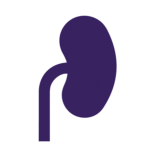 renal friendly icon